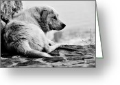Dirty Dog Greeting Cards - Sad Greeting Card by Laura Melis