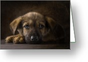 Sad Greeting Cards - Sad Puppy Greeting Card by Bob Nolin