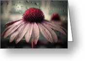 Echinacea Greeting Cards - Sad Solitude Greeting Card by Aimelle ML