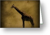 Safari Greeting Cards - Safari Moon Greeting Card by Diane Schuster