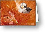 Gallus Gallus Greeting Cards - Safety of Mama Hen Greeting Card by Sari ONeal