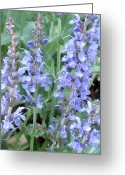 Essential Digital Art Greeting Cards - Sage Greeting Card by Kathy Sheeran