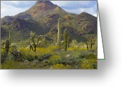 Teddybear Greeting Cards - Saguaro And Teddybear Cholla Greeting Card by Tim Fitzharris