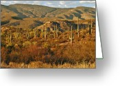 Succulents Greeting Cards - Saguaro Cactus - A very unusual looking tree of the desert Greeting Card by Christine Till
