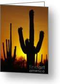 Dramatic Light Greeting Cards - Saguaro Sunset Greeting Card by Sandra Bronstein