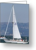 White Wing Greeting Cards - Sail Boats on The San Francisco Bay - 7D18337 Greeting Card by Wingsdomain Art and Photography