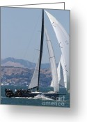 White Wing Greeting Cards - Sail Boats on The San Francisco Bay - 7D18344 Greeting Card by Wingsdomain Art and Photography