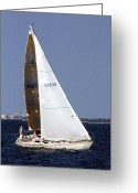 Dana Oliver Greeting Cards - Sailing Greeting Card by Dana  Oliver