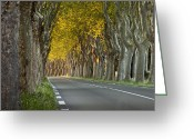 Tree-lined Greeting Cards - Saint Remy Trees Greeting Card by Brian Jannsen
