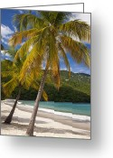 Turquois Greeting Cards - Saint Thomas Greeting Card by Brian Jannsen