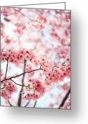 Pink Flower Branch Greeting Cards - Sakura Greeting Card by Yoshika Sakai