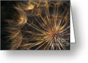 Structures Greeting Cards - Salsify Seed Head Greeting Card by Richard Garvey-Williams