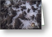 Birthright Greeting Cards - Salt - Goree Texture   Greeting Card by Fania Simon
