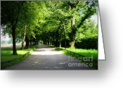 Tree-lined Greeting Cards - Salzburg Lane Greeting Card by Carol Groenen