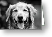 Gallery Print Greeting Cards - Sam Smiling Greeting Card by Julie Niemela