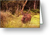 Horns Greeting Cards - Sambar Deer II. Horton Plains National Park. Sri Lanka Greeting Card by Jenny Rainbow
