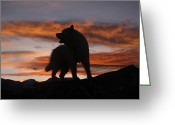 Purebreed Greeting Cards - Samoyed at Sunset Greeting Card by Kent Dannen and Photo Researchers