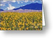 Sand Dunes Greeting Cards - San Dunes Sunflowers Greeting Card by Scott Hansen