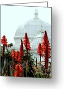 Golden Gate Park Greeting Cards - San Francisco Conservatory of Flowers in Golden Gate Park . 7D5799 Greeting Card by Wingsdomain Art and Photography