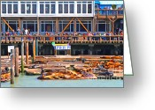 Impressionist Digital Art Greeting Cards - San Francisco Pier 39 Sea Lions . 7D14272 Greeting Card by Wingsdomain Art and Photography