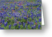Texas Bluebonnet Greeting Cards - Sand Bluebonnet And Paintbrush Texas Greeting Card by Tim Fitzharris