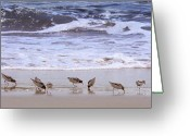 Sandpiper Greeting Cards - Sand Dancers Greeting Card by Steven Sparks