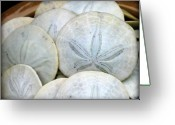 Beach Photo Greeting Cards - Sand Dollars from the Pacific Greeting Card by Mg Rhoades