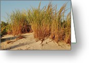 Golden Framed Prints Greeting Cards - Sand Dune I - Jersey Shore Greeting Card by Angie McKenzie