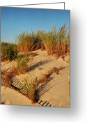 Golden Framed Prints Greeting Cards - Sand Dune II - Jersey Shore Greeting Card by Angie McKenzie