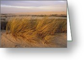Beach Grass Greeting Cards - Sand Dunes At Oso Flaco Nature Greeting Card by Rich Reid