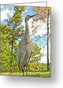 Feeding Greeting Cards - Sandhill Crain 0094 Greeting Card by Michael Peychich