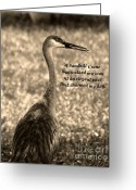Sandhill Crane Greeting Cards - Sandhill Crane Poem Greeting Card by Vilma Rohena