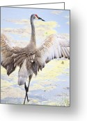 Cranes In Florida Greeting Cards - Sandhill Crane Wings Greeting Card by Carol Groenen