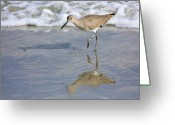 Seafoam Greeting Cards - Sandpiper Reflection Greeting Card by Kristin Elmquist