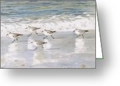 Snowy Greeting Cards - Sandpipers on Siesta Key Greeting Card by Shawn McLoughlin