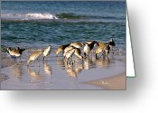 Sandpiper Greeting Cards - Sandpipers on the Gulf Greeting Card by Richard Roselli