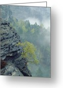 Trees And Rock Cliffs Greeting Cards - Sandstone Outcroppings, Sachsische Greeting Card by Norbert Rosing