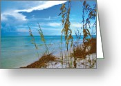 Surf Fishing Photo Greeting Cards - Sanibel Sea Oats Greeting Card by Timothy Lowry