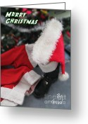 Nc Greeting Cards - Santa Christmas Card Greeting Card by John Haldane