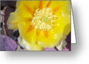 Lisa Bentley Greeting Cards - Santa Rita Prickly Pear Bloom 01 Greeting Card by Lisa Bentley