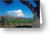 Landscapes Framed Prints Greeting Cards - Santa Ynez Vineyard View Greeting Card by Kathy Yates