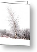 Tree-covered Greeting Cards - Santas Tree Greeting Card by Emily Stauring