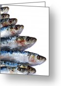 Meat Market Greeting Cards - Sardines Greeting Card by Jane Rix