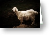 Horns Greeting Cards - Sardinian goat Greeting Card by Laura Melis