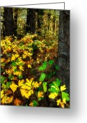 Fall Cards Greeting Cards - Sassafras Forest II Greeting Card by Dan Carmichael
