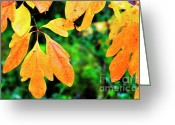 Webster County Greeting Cards - Sassafras Leaves Greeting Card by Thomas R Fletcher