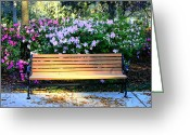 Savannah Square Greeting Cards - Savannah Bench Greeting Card by Carol Groenen