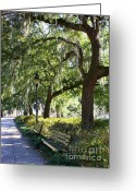 Savannah Square Greeting Cards - Savannah Benches Greeting Card by Carol Groenen