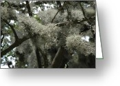 Live Oak Trees Greeting Cards - Savannah Moss Greeting Card by Valerie Rakes
