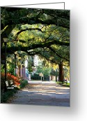 Park Benches Greeting Cards - Savannah Park Sidewalk Greeting Card by Carol Groenen